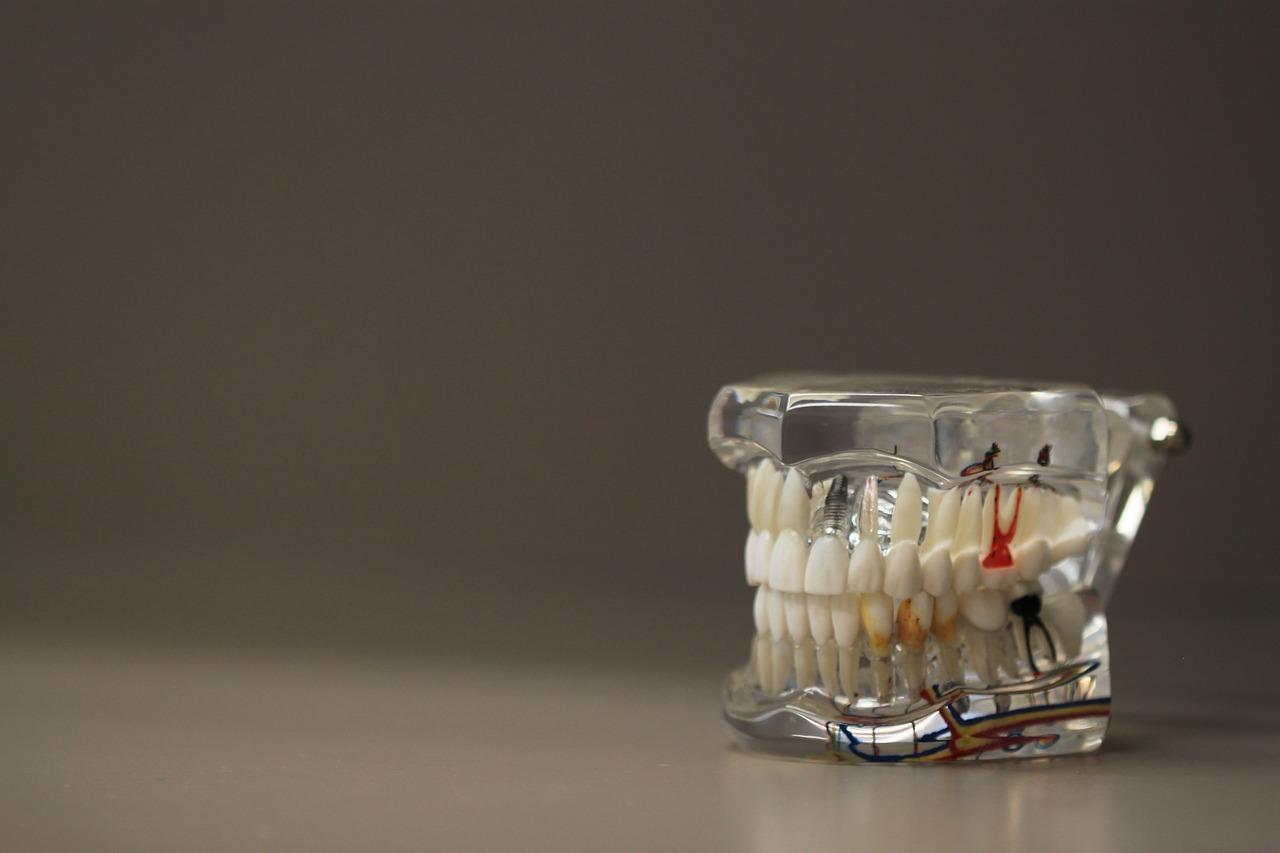 dentistry, dentals, teeth